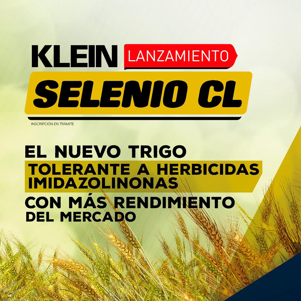 KLEIN SELENIO CL | El nuevo trigo tolerante a herbicidas imidazolinonas con más rendimiento del mercado